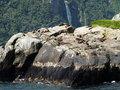 Free Australasian Fur Seals Stock Photo - 9456910