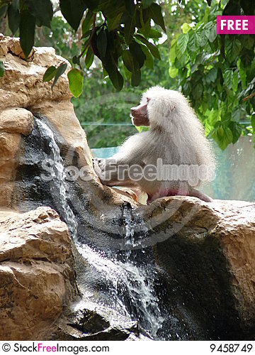 Free Watterfall Ape Royalty Free Stock Images - 9458749
