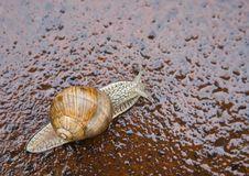 Free Snail Stock Photo - 9452050