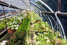Free Greenhouse Stock Photo - 9452160