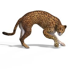Free Big Cat Cheetaah Stock Photography - 9452252