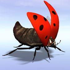 Free Ladybug Stock Photography - 9452282