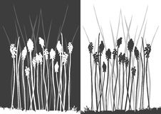 Set Of Vector Grass Silhouettes Stock Photo