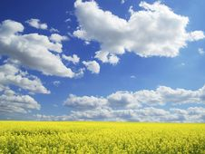Free Rape Field Royalty Free Stock Photos - 9456938