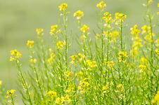 Free Green Grass And Field Flowers Royalty Free Stock Photography - 9457057