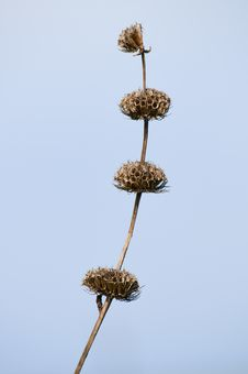 Free Dry Field Flowers Royalty Free Stock Photography - 9457097