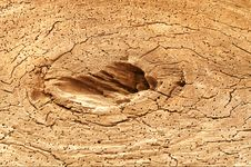 Free Cracked Old Stump. Nice Picture. Stock Photo - 9458750