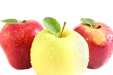 Free Apples Stock Photography - 9459432