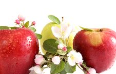 Free Apples Royalty Free Stock Images - 9459509