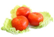 Free Tomatoes On Salad. Royalty Free Stock Image - 9459606