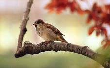 Free Brown And White Fur Bird At Brown Tree Branch Stock Images - 94536654