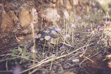 Free Brown And Gray Tortoise Walking On Grass Near Stone Stock Images - 94580974