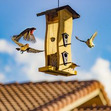 Free Brown And Beige Finch Birds Surround Bird House Royalty Free Stock Photography - 94580987