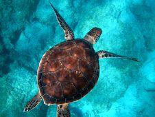 Free Sea Turtle Swimming Royalty Free Stock Image - 94581026