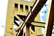 Free Birds Landing On A Bridge Royalty Free Stock Images - 94581199