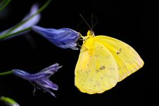 Free Butterfly, Moths And Butterflies, Insect, Invertebrate Stock Image - 94594601
