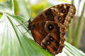 Free Tropical Butterfly Stock Photography - 9461962
