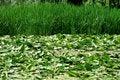 Free Vegetation Royalty Free Stock Photography - 9467047