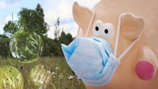 Free Pig With Face Mask Royalty Free Stock Images - 9460279