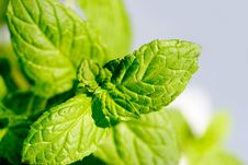 Free Mint Royalty Free Stock Image - 9463766