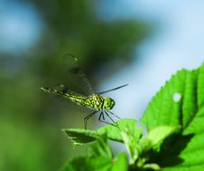 Free Dragonfly Royalty Free Stock Photo - 9464055