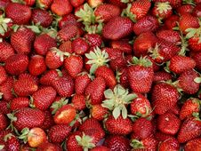 Free Strawberries Royalty Free Stock Images - 9464079