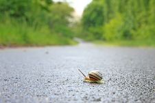 Free Snail Royalty Free Stock Images - 9464189