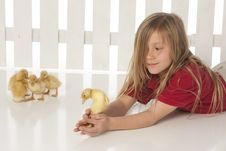 Free Little Girl With Baby Ducks Stock Photos - 9464423