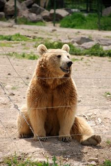 Free Bear Sittting In A Zoo Royalty Free Stock Image - 9465296