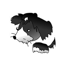 Bichon Dog Royalty Free Stock Images