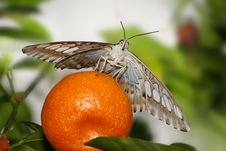 Free Butterfly, Clipper Royalty Free Stock Photography - 9465707