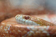 Free Snake Stock Image - 9468521