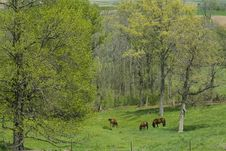 Horses Grazing In A Spring Valley Stock Images