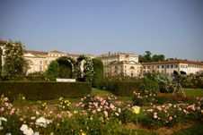 Free Roses In The Villa Reale S Royalty Free Stock Photo - 9469335