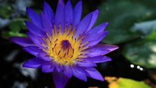 Free Blue Water Lily Stock Photo - 94642390