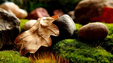 Free Maple Leaf And Nut On Moss Stock Photography - 94642432