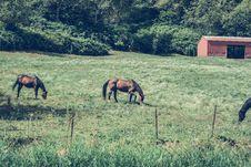 Free Horses On Pasture Stock Photo - 94642520