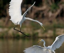 Free Egret In Water Stock Photography - 9471322