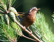 Free Wild Bird On Branch Stock Image - 9471751