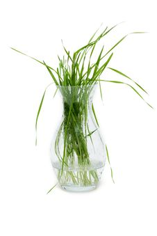 Free Bunch Of The Green Herb Royalty Free Stock Photo - 9472385