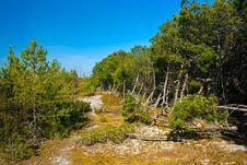 Free Pine Wood Royalty Free Stock Image - 9472676