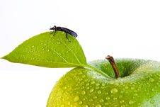 Free Green Apple And Bug Royalty Free Stock Photo - 9472845