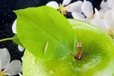Free Green Apple And Caterpillar Royalty Free Stock Image - 9472886