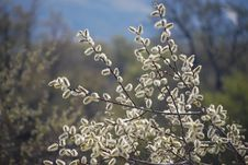 Free Tree Branches With Buds Stock Images - 9473014
