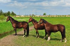 Free Beautiful Brown Horse Royalty Free Stock Photos - 9473018