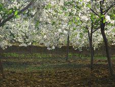 Free Spring Garden Stock Photography - 9473142