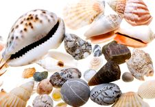 Free Beautiful Seashells Isolated On White Royalty Free Stock Images - 9474439
