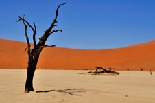 Free Sossusvlei Tree Royalty Free Stock Photo - 9474755