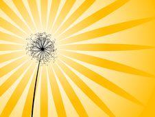 Free Dandelion Royalty Free Stock Image - 9475026