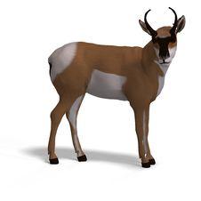 Free Antelope Stock Image - 9475981
